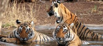 RAJASTHAN WILDLIFE with TAJ TOUR